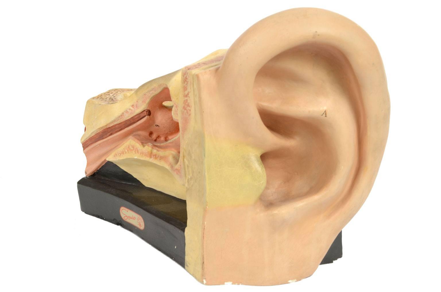 Strumenti medici d'epoca/4164-Modello orecchio