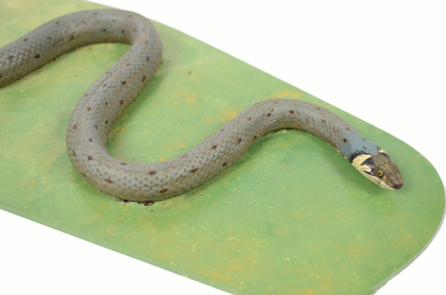 Storia naturale/5996-Modello del serpente