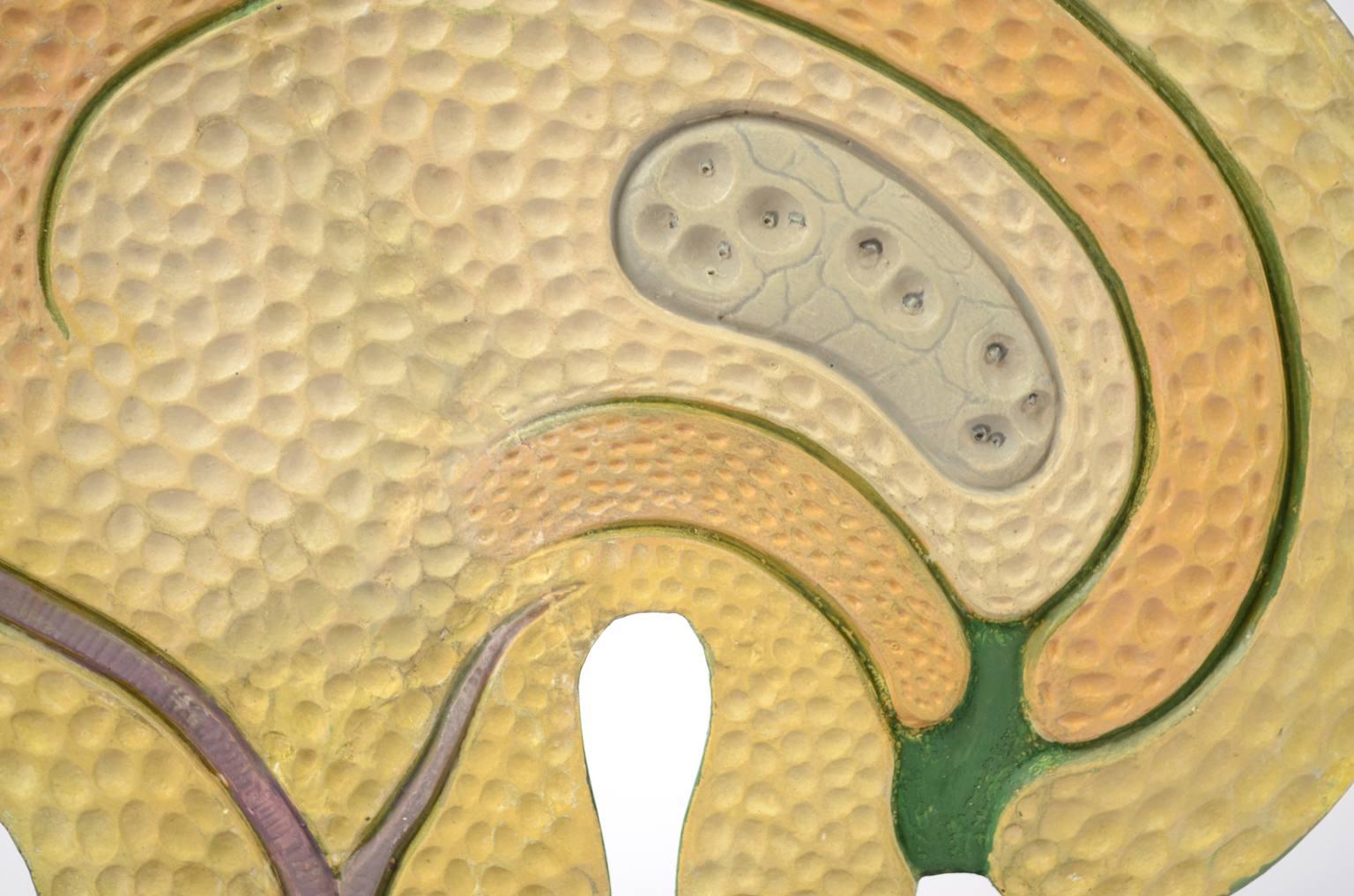 Storia naturale/61062-Sicono 1930