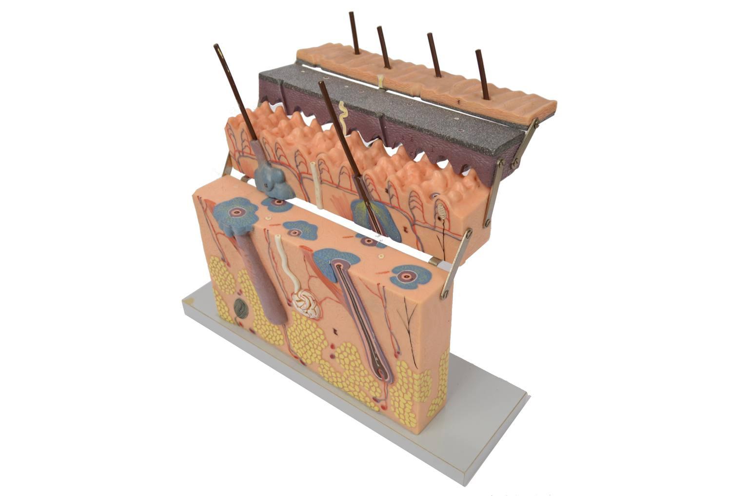Strumenti medici d'epoca/6138-Modello dermatologico