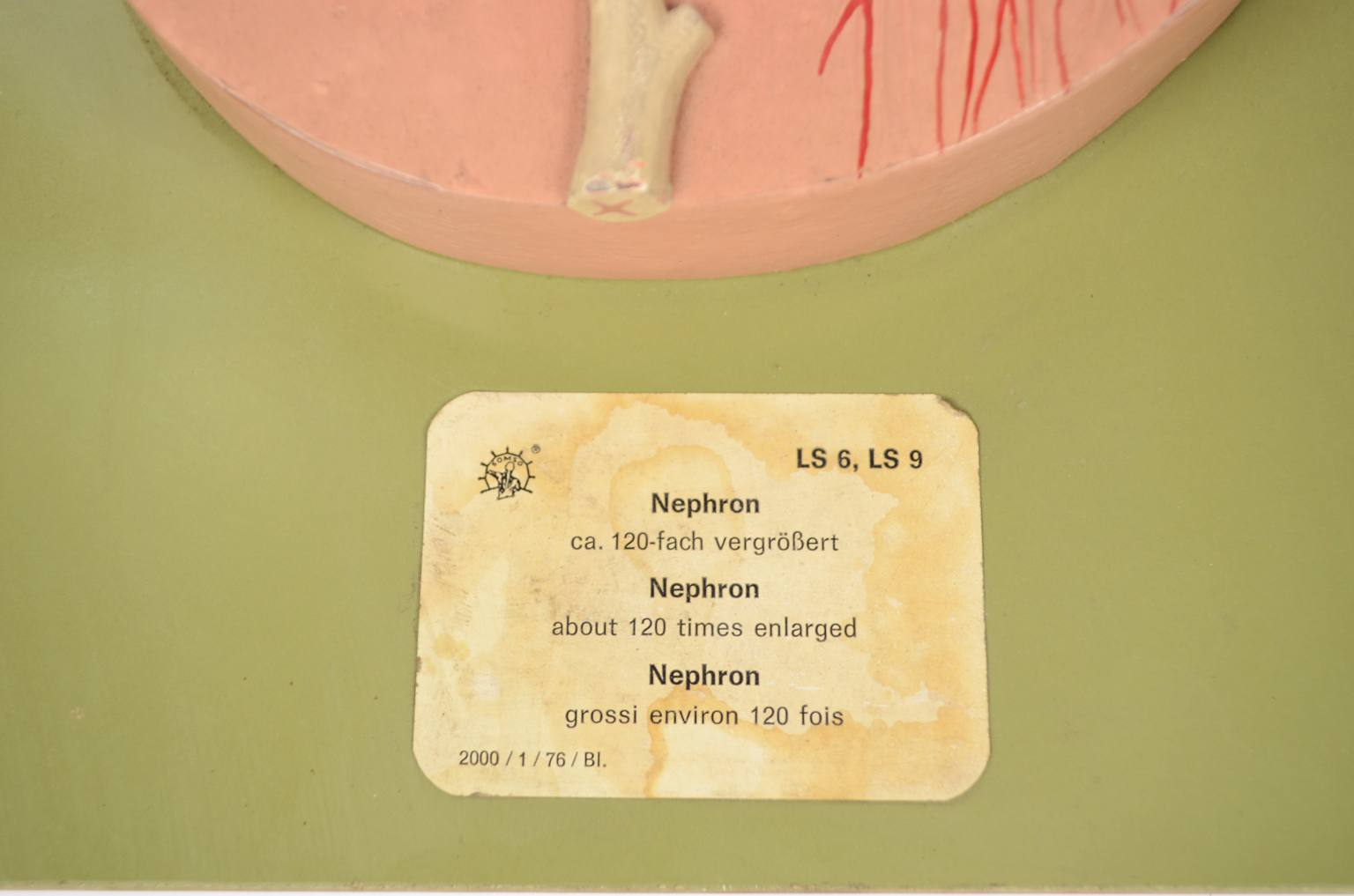 Strumenti medici d'epoca/6138A-Grande tavola didattica