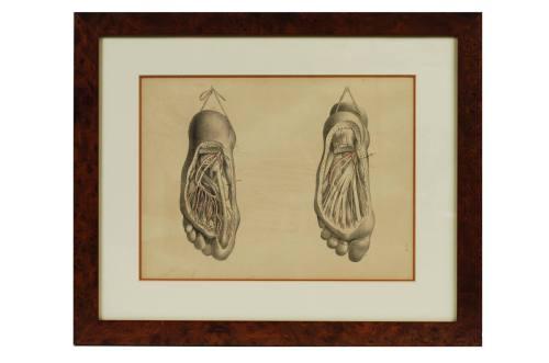 Strumenti medici d'epoca/295-Litografia anatomica/Più info