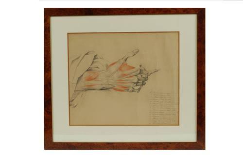 /296-Tavola anatomica/